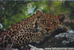 leopard_a
