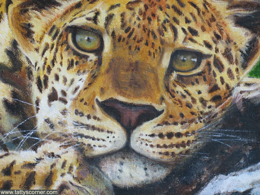 leopard_c