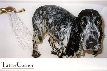 And here is our Lex, in the bath