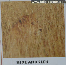 hideandseek_idea