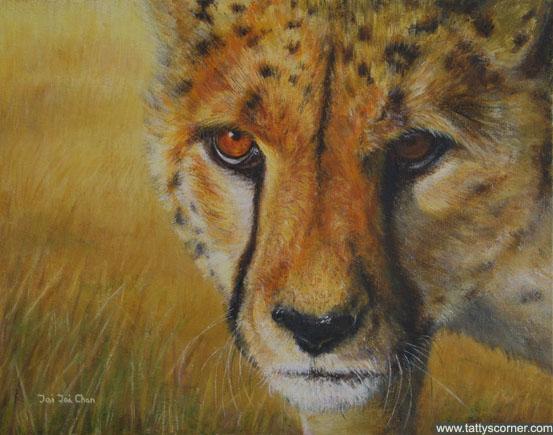 The Stalking Cheetah
